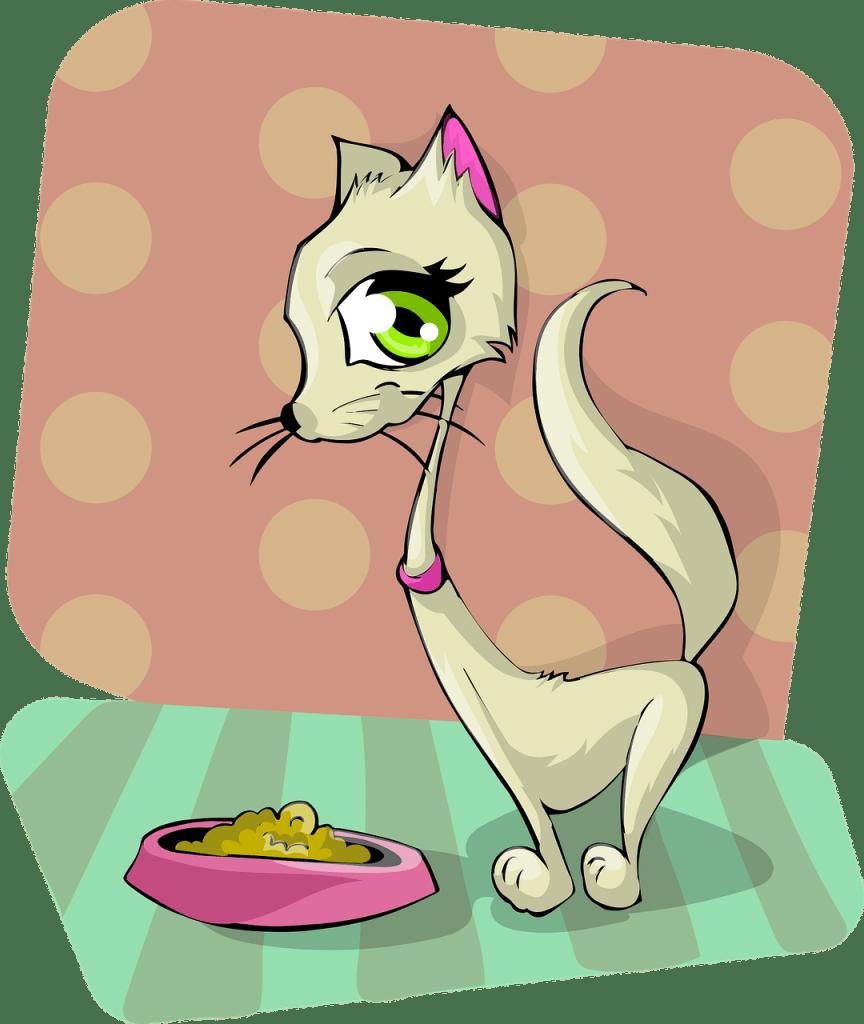 חתול ואוכל